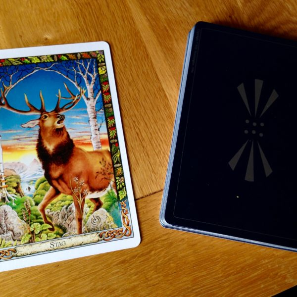 <span>Reflections On</span> Druid Animal Symbolism: The Stag
